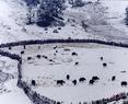 雪后的夏季牧场