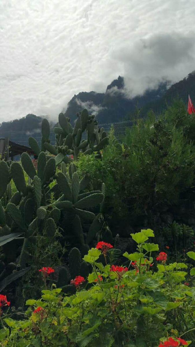 旦增家院子里盛开的鲜花